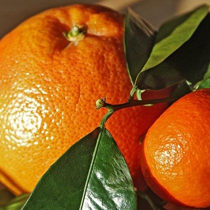 Citrusfruit